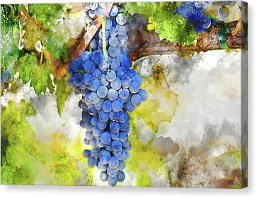 Red Wine Canvas Print - Red Grapes On The Vine by Brandon Bourdages