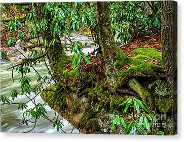 Back Fork Of Elk River Canvas Print