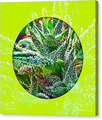 Weed Canvas Print - Cannabis 420 Collection by Marvin Blaine