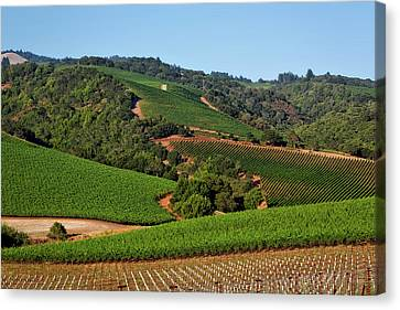 Napa Valley Vineyard Canvas Print by Mountain Dreams