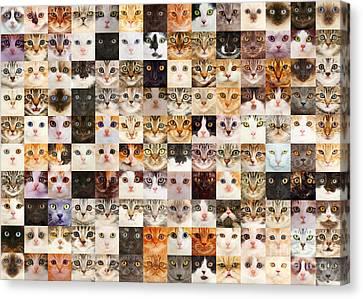 140 Random Cats Canvas Print
