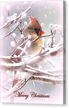 1554-003 Cardinal Canvas Print