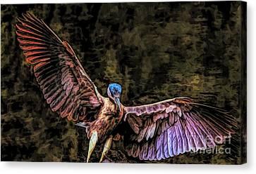 Canvas Print - Black Crowned Night Heron by Paulette Thomas