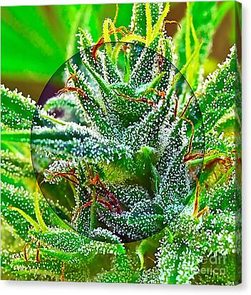 Cannabis 420 Collection Canvas Print by Marvin Blaine