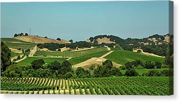 Napa Valley Vineyard Canvas Print by Mountain Dreams