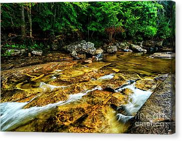 Canvas Print featuring the photograph Williams River Summer by Thomas R Fletcher