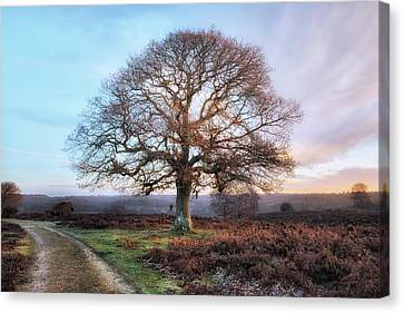 New Forest - England Canvas Print