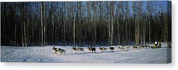 18 Huskies Begin The Long Haul Of 1049 Canvas Print by Panoramic Images