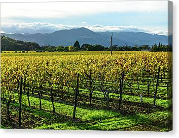 Napa Valley California Vineyard Canvas Print