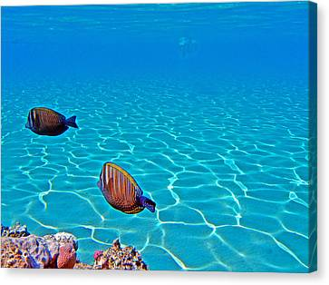 Underwater World. Canvas Print by Andy Za