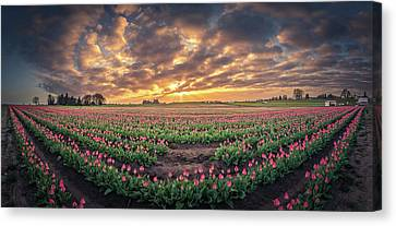 Canvas Print featuring the photograph 180 Degree View Of Sunrise Over Tulip Field by William Lee