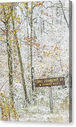 Cranberry Wilderness Canvas Print