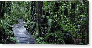 Canvas Print featuring the photograph Forest Boardwalk by Les Cunliffe