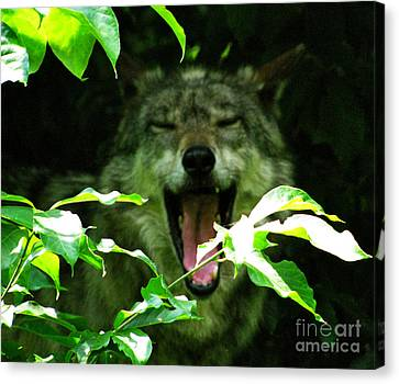 Canvas Print featuring the photograph The Wild Wolve Group A by Debra     Vatalaro
