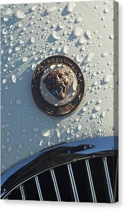 1954 Jaguar Xk120 Roadster Hood Emblem Canvas Print by Jill Reger