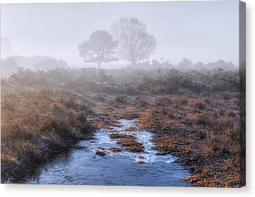 New Forest - England Canvas Print by Joana Kruse
