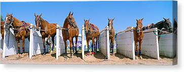 1998 World Polo Championship, Horses Canvas Print by Panoramic Images