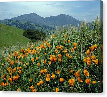 1a6493 Mt. Diablo And Poppies Canvas Print