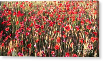 A Summer Full Of Poppies Canvas Print by Hannes Cmarits