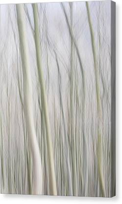 Abstract Trees Canvas Print by Jochen Schoenfeld