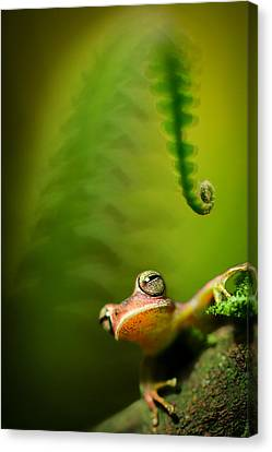 Frog Canvas Print - Amazon Tree Frog by Dirk Ercken