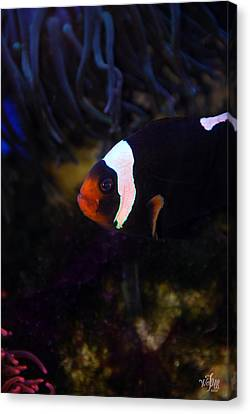 Anemone Fish Canvas Print by Thea Wolff
