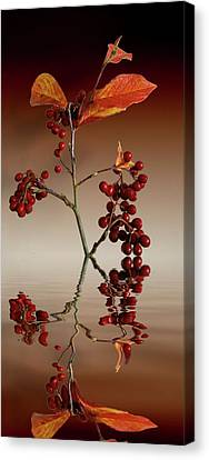 Canvas Print featuring the photograph Autumn Leafs And Red Berries by David French