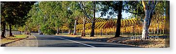 Canvas Print featuring the photograph Autumn Vines by Bill Robinson