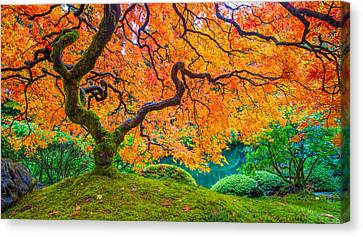 Canvas Print featuring the photograph Autumn's Jewel by Patricia Davidson
