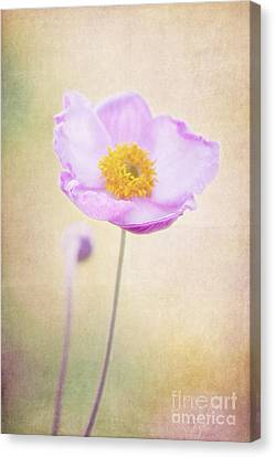 Beauty Canvas Print by Angela Doelling AD DESIGN Photo and PhotoArt