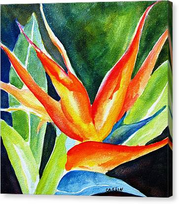 Bird Of Paradise  Canvas Print by Carlin Blahnik