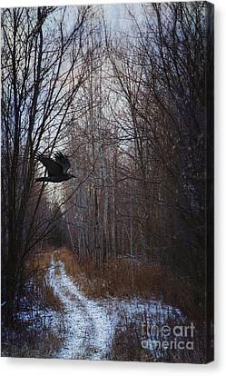 Black Bird Flying By In Forest Canvas Print by Sandra Cunningham
