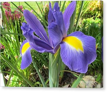 Blue Iris Canvas Print by Joyce Woodhouse