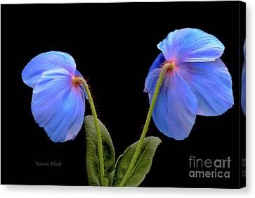 Blue Poppies Canvas Print