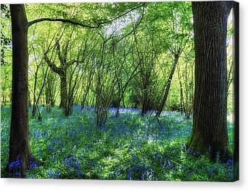 Bluebells In The New Forest Canvas Print by Joana Kruse
