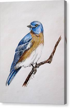 Bluebird Guardian Canvas Print by Kathrine McMurray