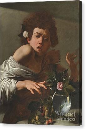 Boy Bitten By A Lizard Canvas Print by Caravaggio