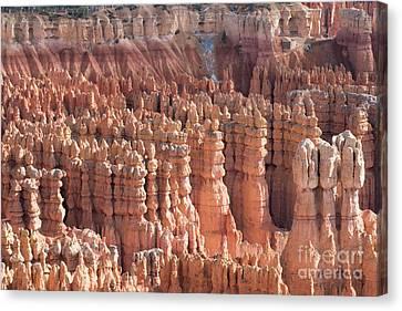 Bryce Canyon Canvas Print by Juli Scalzi