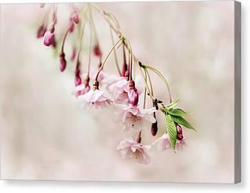 Budding Blossom Canvas Print