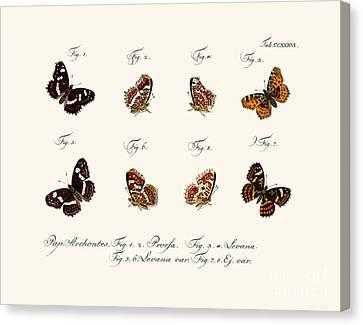 Butterflies Canvas Print by German School