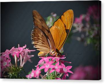 Canvas Print featuring the photograph Butterfly by Savannah Gibbs