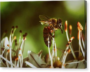 Canvas Print featuring the photograph Bzzz by Michael Siebert