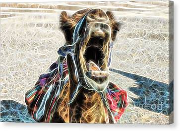 Camel Collection Canvas Print