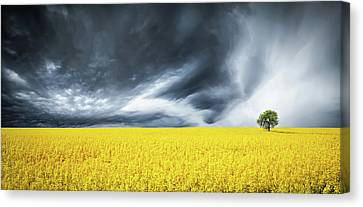 Canola Field Canvas Print by Bess Hamiti