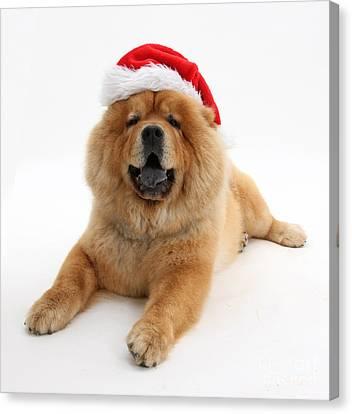 House Pet Canvas Print - Christmas Dog by Mark Taylor