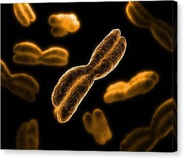 Chromosomes, Artwork Canvas Print by Sciepro