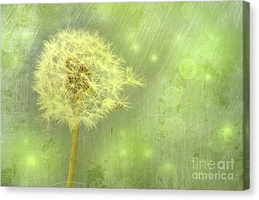 Closeup Of Dandelion With Seeds Canvas Print by Sandra Cunningham