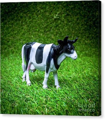 Toy Animals Canvas Print - Cow Figurine by Bernard Jaubert