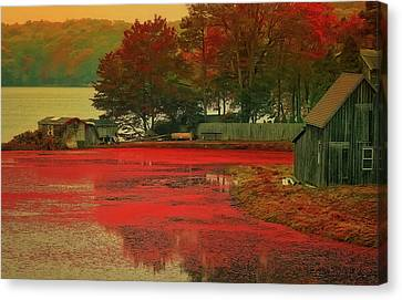 Cranberry Farm Canvas Print by Gina Cormier