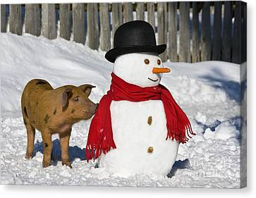 Curious Piglet And Snowman Canvas Print by Jean-Louis Klein & Marie-Luce Hubert